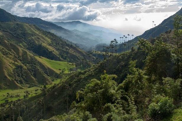 20 destinos turísticos de Latinoamérica - Valle de Cocora: Colombia