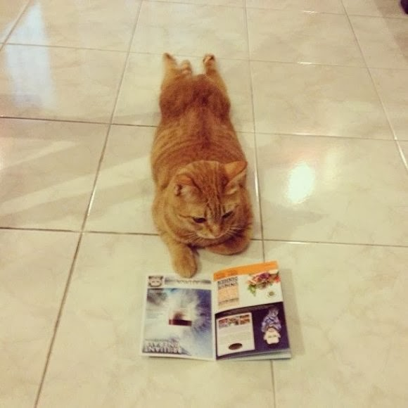 Cute cat reads magazine