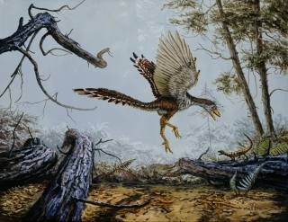 birds-evolved-from-dinosaurs