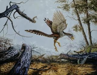 birds-evolved-from-dinosaurs