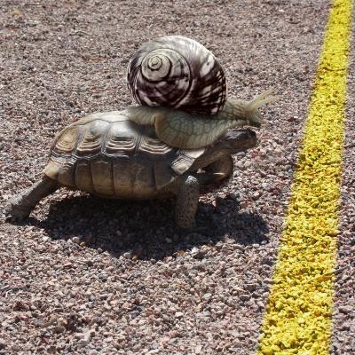 'Kapløb' med snegl der rider på skildpadde