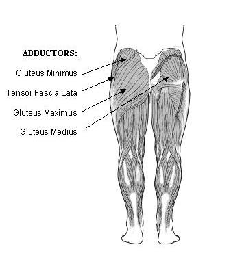 Anatomy of the bum