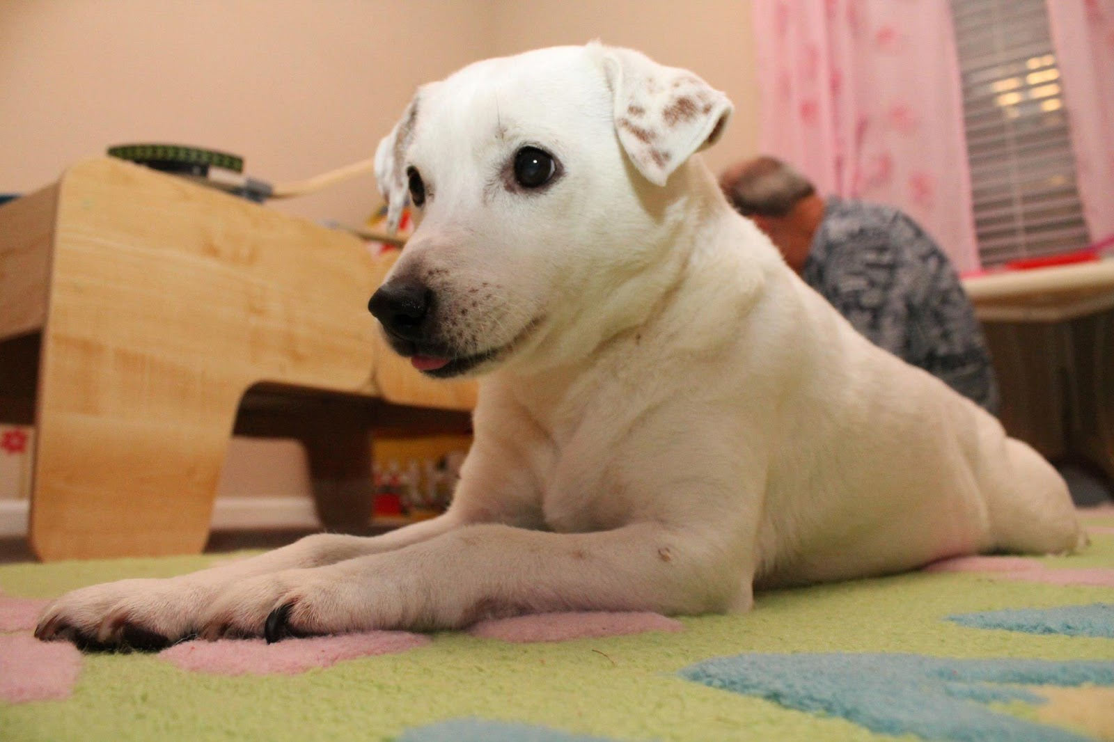 Prayers for Our Pets: Urgent Prayer Request for Toby the Dog