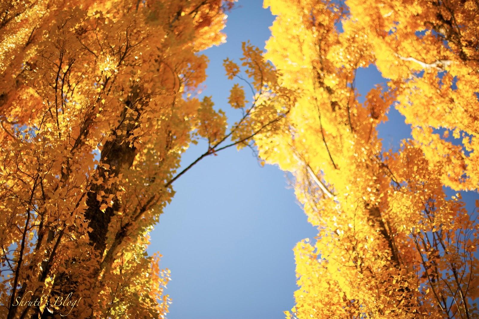 the magnificence of autumn in john keats to autumn To autumn - season of mists and mellow fruitfulness.