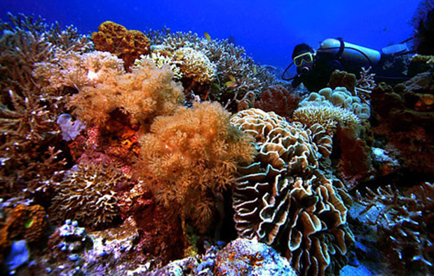 Keanekaragaman gen dan jenis yang terdapat dalam kehidupan organisme serta kondisi iklim d 3 Contoh Keragaman Ekosistem Perairan di Indonesia