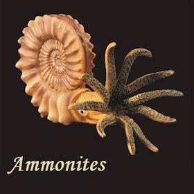 Guía de ammonites