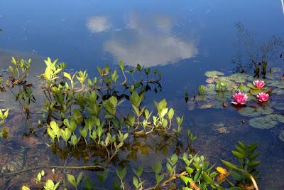 biologiskt renad baddamm