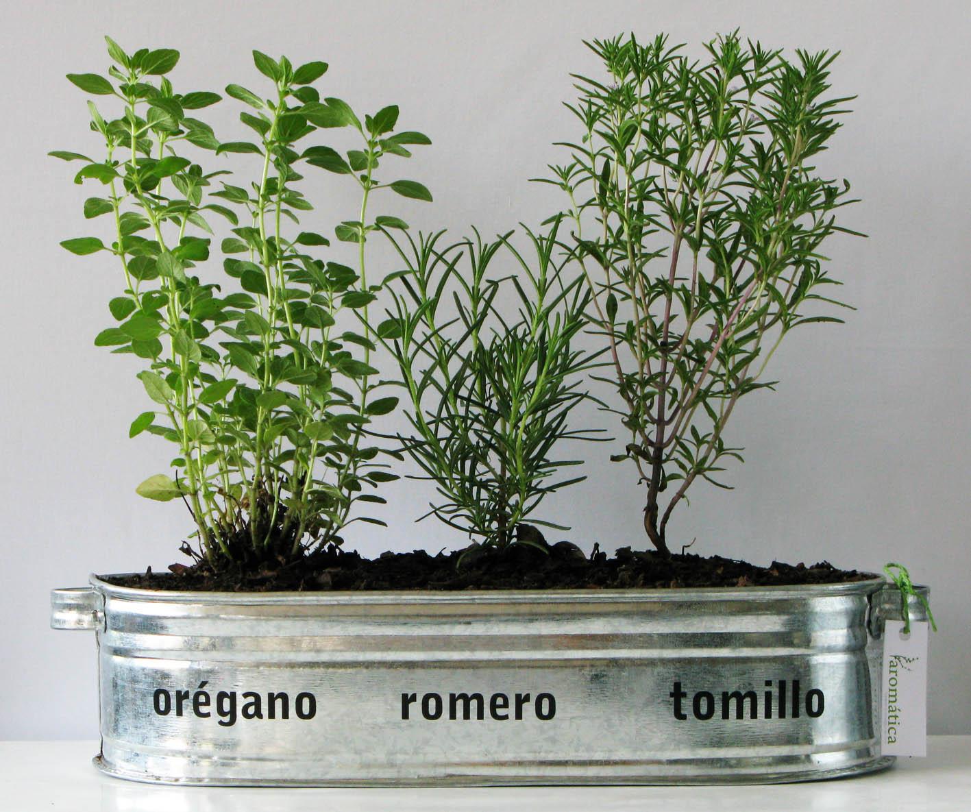 Spazio noi primavera con plantas arom ticas - Plantas para macetas exterior resistentes ...