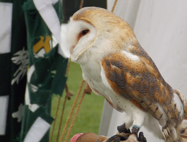 birds of prey owl at tutbury castle event