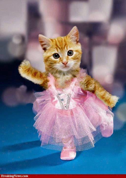 mencari toko yang jual baju kucing online murah memang gampang gampang ...