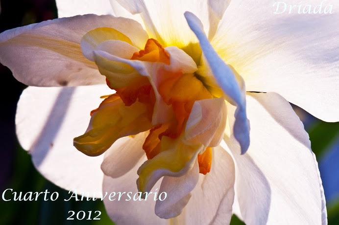 Regalo de Driada en el 4º aniversario de este blog.