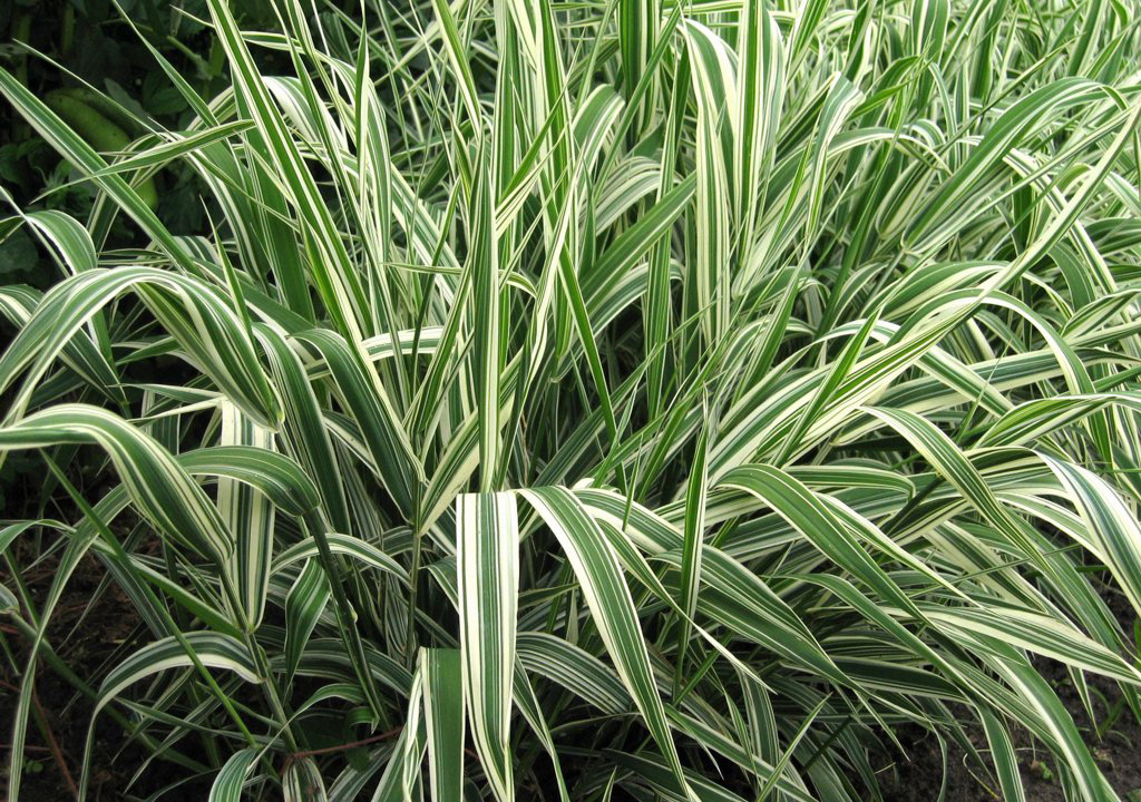 Valrine vernon home more plant a thrifty garden for Plants and grass