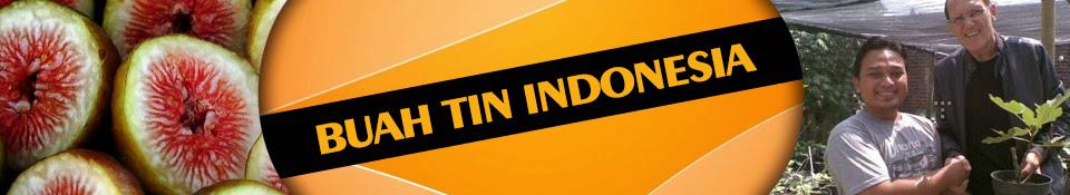 Budidaya Buah Tin Indonesia 081331952345