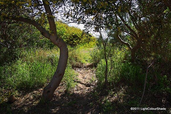 Nature corner. Lane