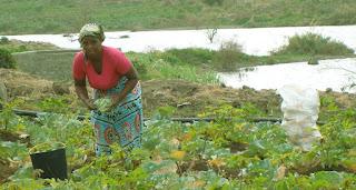desenvolvimento sustentável, sustentável, Rio+20, FIDA, alimentar sustentável, futuro sustentável, agrícola sustentável,