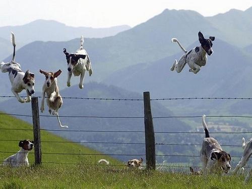 Cloturer son jardin (grillage)   Jump+over+fence