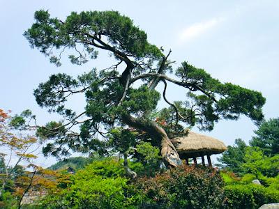 Bonsai Garden at The Garden of Morning Calm South Korea