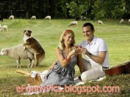 Photo Fail - Dog and Sheep