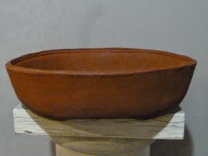 vaso conifera