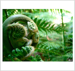 curled up fern, laura hol art, limited edition prints of ferns, alien fern,