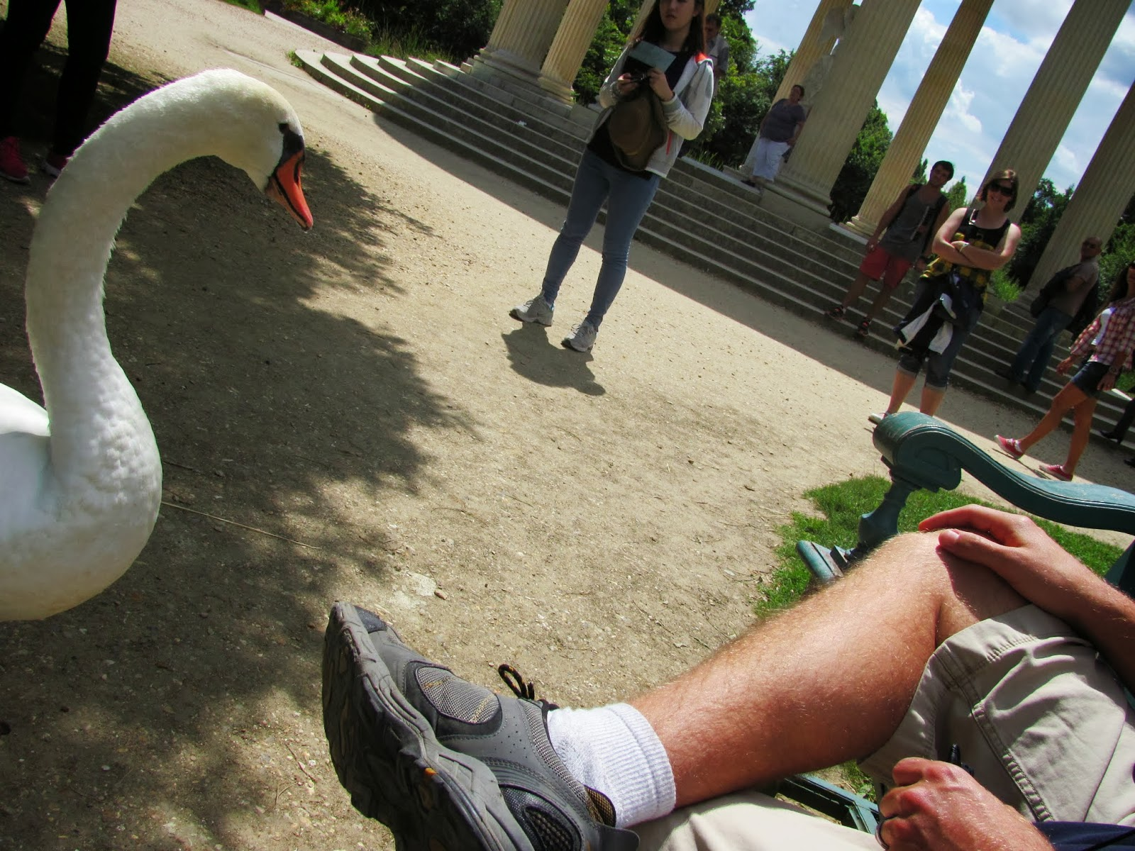 A swan prepares to attack Cory in France