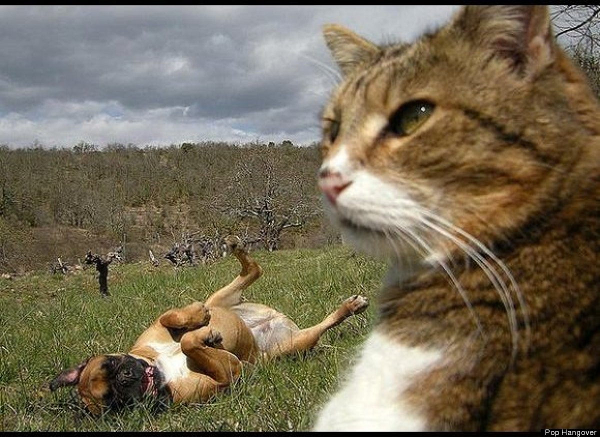 Animal Photobombs - Photobomb Animals