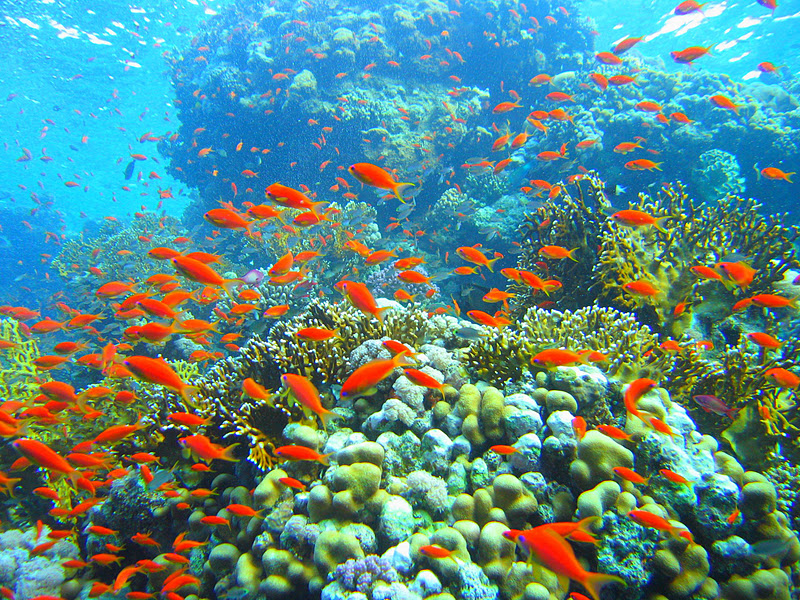World Beautiful Places: Coral reef 10 Most Beautiful Coral Reefs World