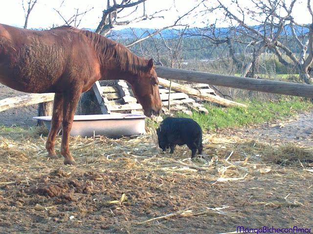 caballo y cerdito