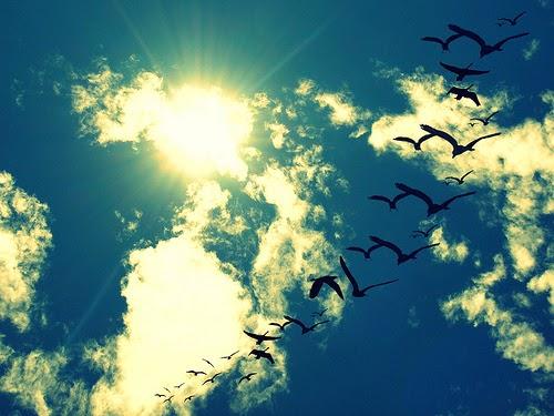 A música que amo: Free As a Bird