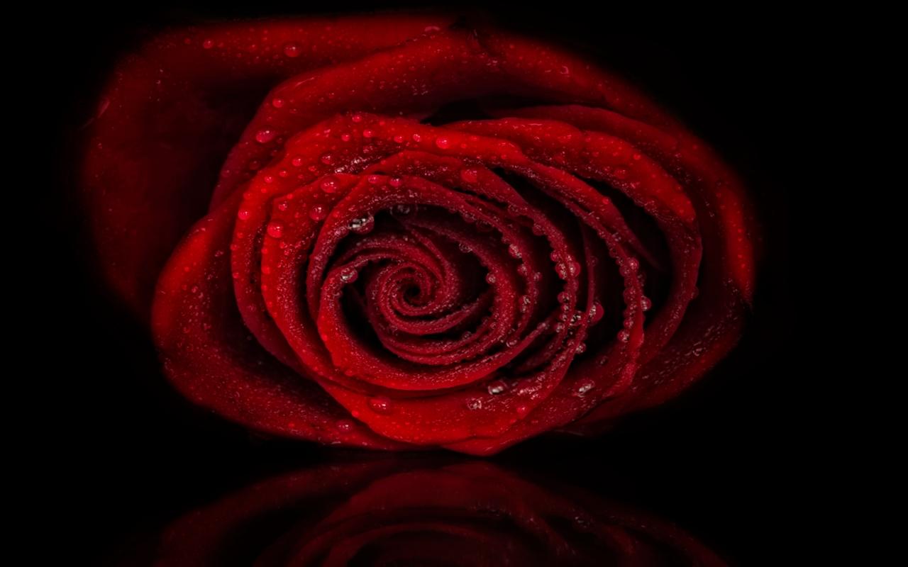 http://1.bp.blogspot.com/-cN-OCUioCus/TyAK5ashuuI/AAAAAAAAEv0/GQm1PsbXrvY/s1600/trandafirul_rosu.jpg