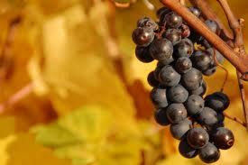 Il vino dei Romani rinasce in Sicilia