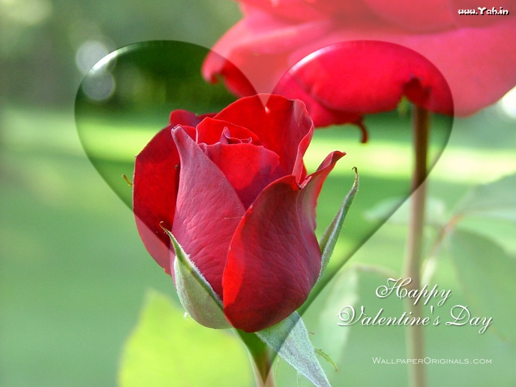 Most Popular s And Wallpapers valentines day flowers flowers for valen