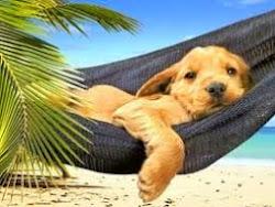 A descansar, a jugar, a leer...