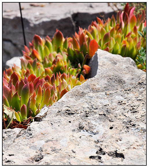 Growing with plants Rock Gardening – Plants for a Rock Garden