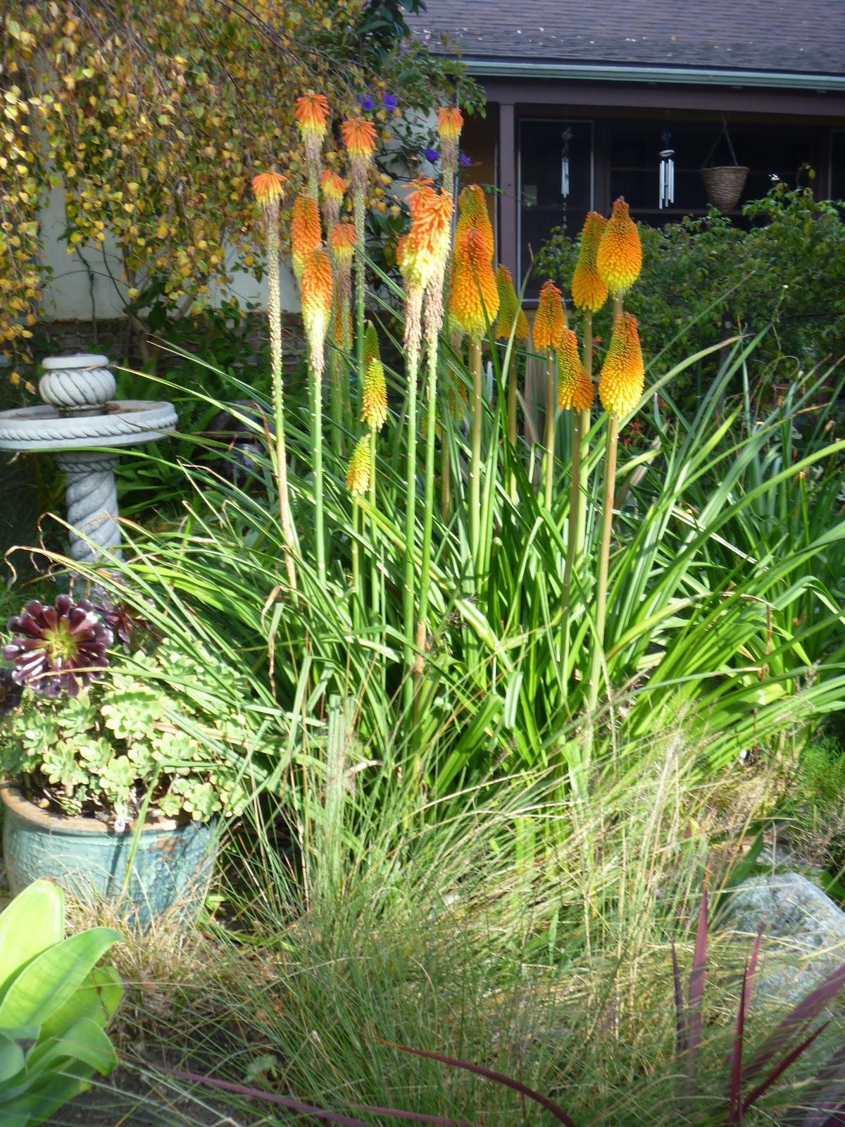 mar vista green garden showcase 2564 armacost avenue cluster 1