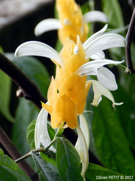 VILLERS-LES-NANCY (54) - Les serres du jardin botanique du Montet-Panache d'officier