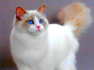 اذا رأيت قطه مثل هذه من قبل فـلا تضغط علي الصورة :)
