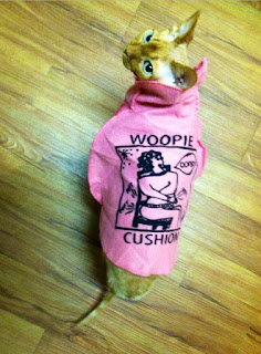 Disco NoFurNo, Woopie Cushion Sphynx