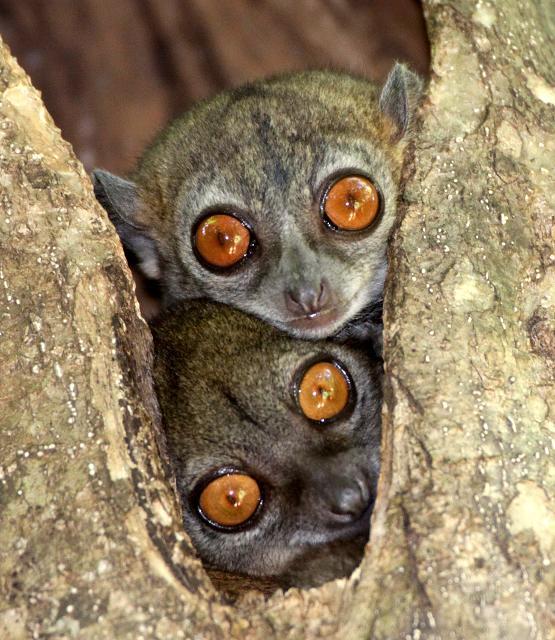 Little Critterz: 10 Most Endangered Animals