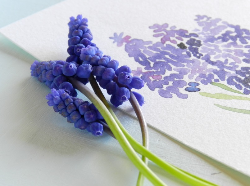 Original Watercolor Painting of Purple Grape Hyacinth Flowers by Elise Engh: Grow Creative