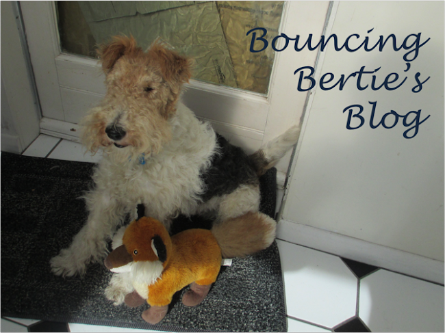 Bouncing Bertie&#39;s Blog