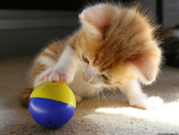 Photo bébé chat qui joue