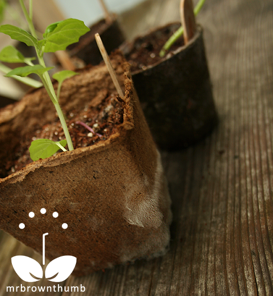 fuzzy white stuff on seed starting pots