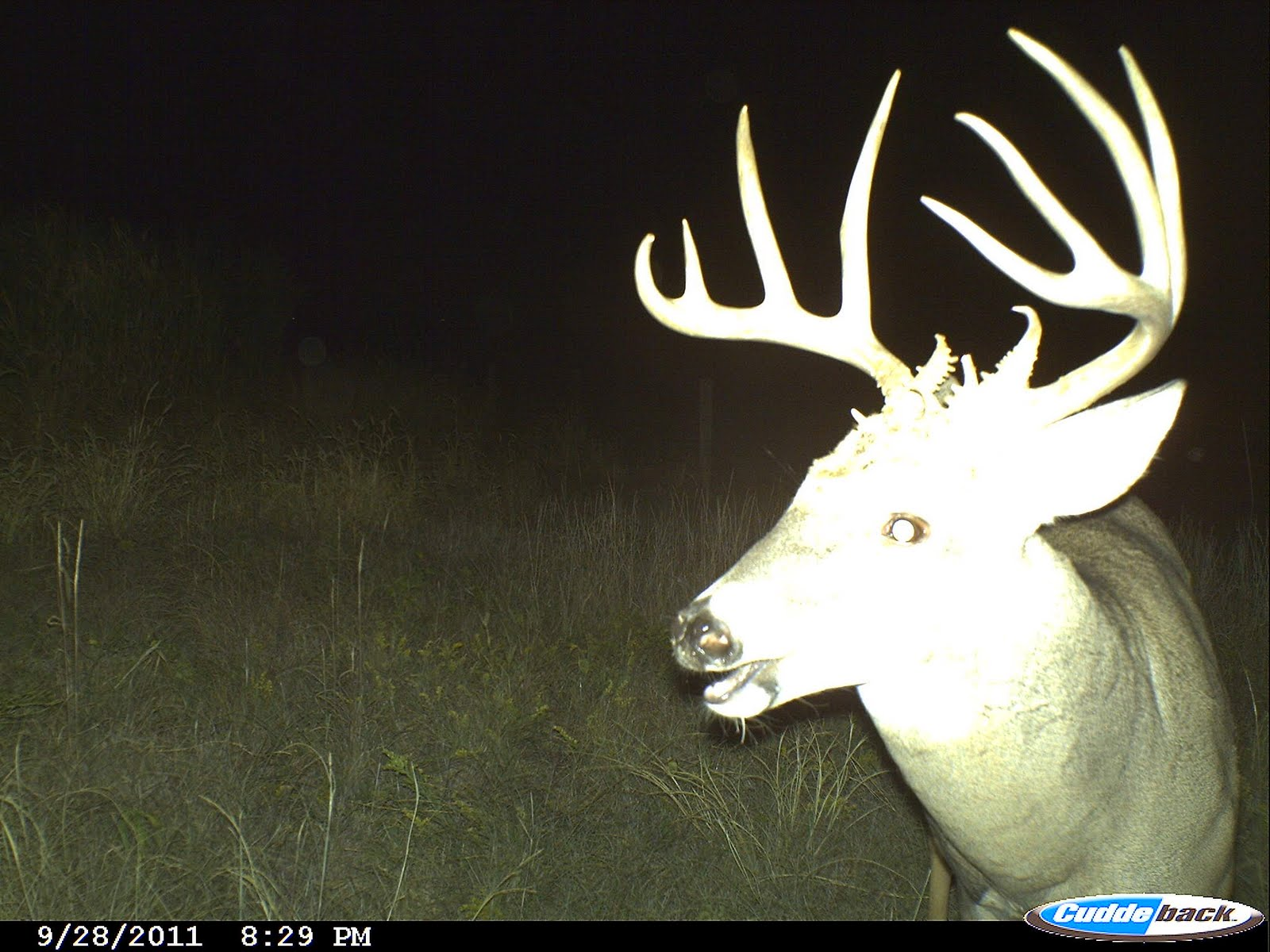 Animals Gone Wild My Quot Cuddeback Quot Trail Camera Really