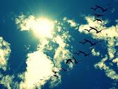 Y volar , y acariciar el cielo con mis manos y olvidar...