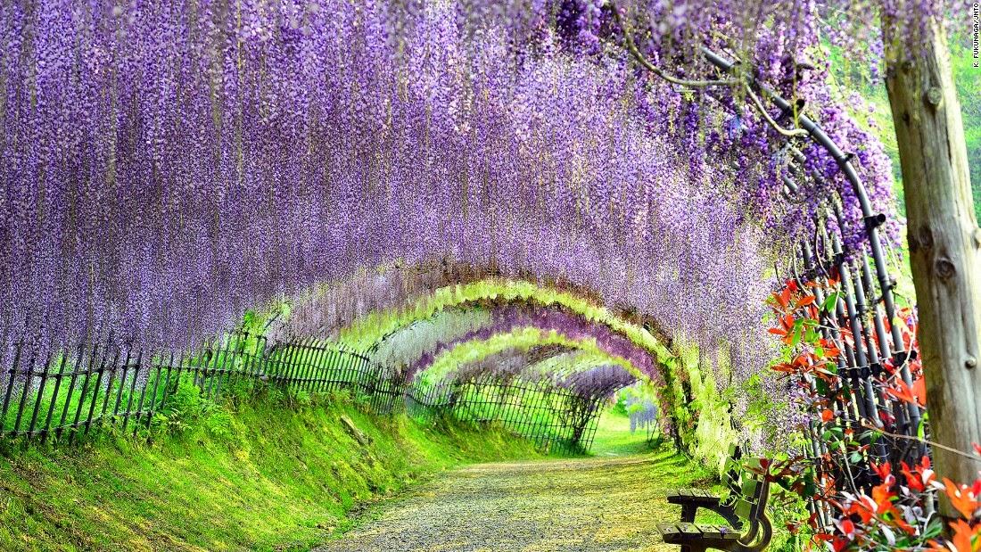 Kết quả hình ảnh cho hình ảnh đẹp Nhật bản