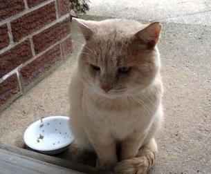 Χαθηκε μεγαλοσωμος γατος απο τον Άλιμο κοντα στα mini soccer (Βαλλιανου), γυρω στα 7 κιλα, φιλικος με χαρακτηριστικο το πολυ δυνατο χουρχουρισμα