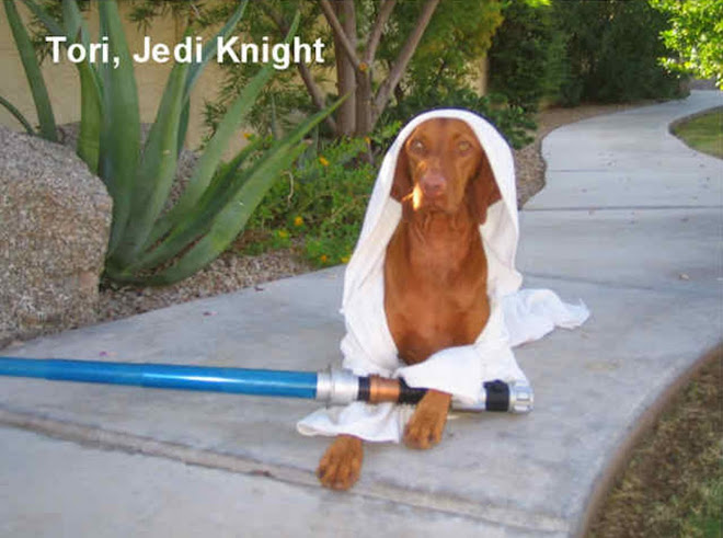 Jedi Knight Tori