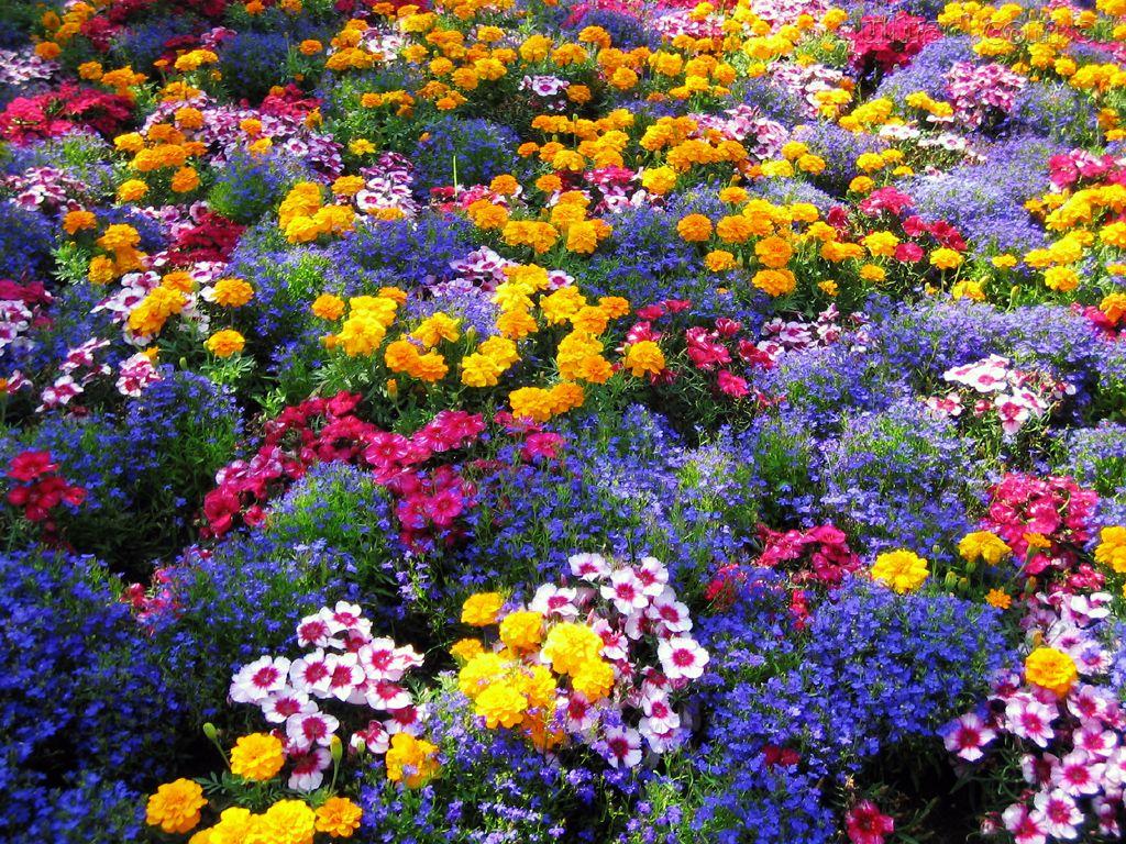 jardim flores e plantas: REIKI E HOLISTICA – TUCUMÃ – PARÁ: EXULTAÇÃO DA FLORES OU FLORAIS