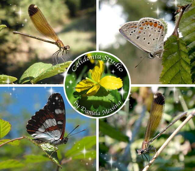 Farfalle e Libellule nel Bosco - Foto by Celidonia - Daniela Messina